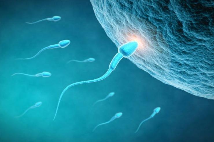 Khóa tập huấn Nội tiết sinh sản và Kích thích buồng trứng